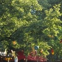 Szláv fesztiválkörkép - Bulgária