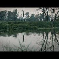 Szláv fellépők a Szigeten 1: The Feral Trees (Lengyelország)