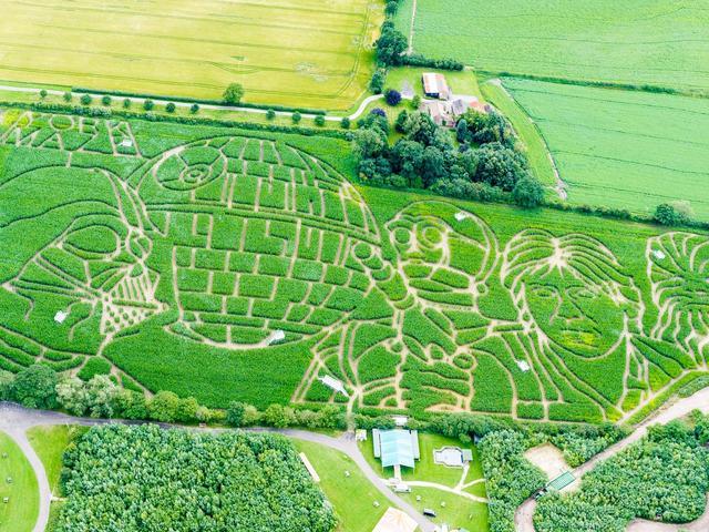 Star Wars kukorica labirintus