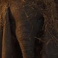 Dumbo előzetes