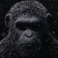 War for the Planet of the Apes kedvcsináló előzetes