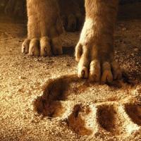 Az oroszlánkriály - kedvcsináló előzetes