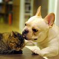 A kutyák jobbak, mint a macskák