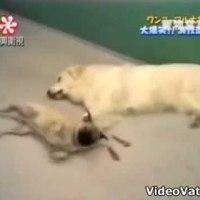 A csalafinta mopsz
