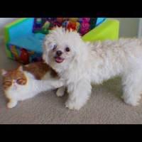 A kutyába ragadt macska