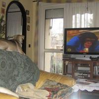 Tudnak-e tévézni a kutyák?