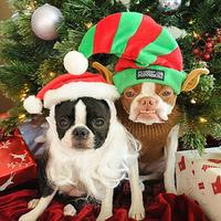 A legcukibb karácsonyi kutyafotó