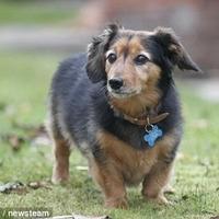 Elment a világ legöregebb kutyája
