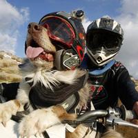 A motocrossos kutya