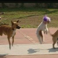 13 ugrókötelező kutya: új világrekord