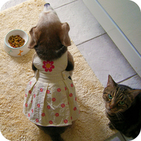 A beagle új ruhája