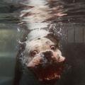 Bulldog a víz alatt