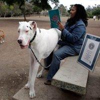 A világ legnagyobb kutyája – a hivatalos győztes