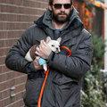 Hugh Jackman és a francia bulldog