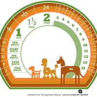 A kutyák életkorának átszámítása