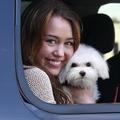 Miley Cyrus, és Sofie, a maltipoo