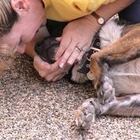 Mesterséges lélegeztetés kutyáknak