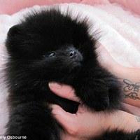 Kelly Osbourne új kutyusa