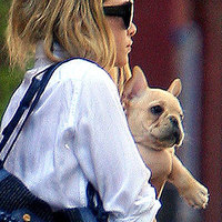 Ashley Olsen francia bulldogja