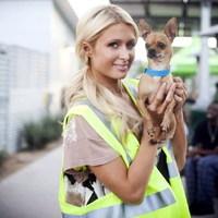 Paris Hilton és Sid Vicious, a csivava