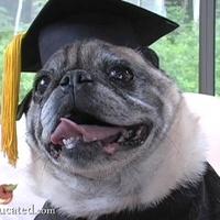 A diplomás mopsz