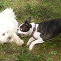 Romeo és Mamba