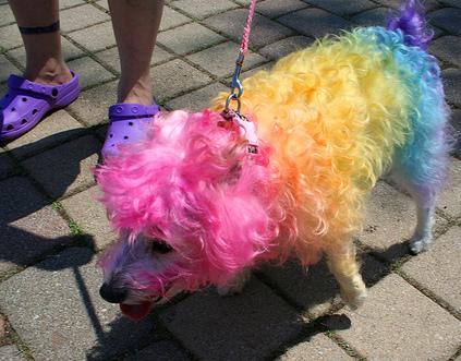 kutyafestés