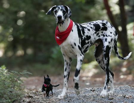legnagyobb kutya gibson