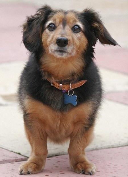 legoregebb kutya