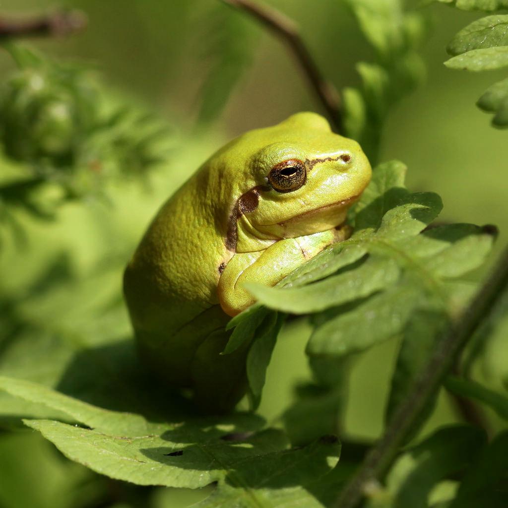 macro_green_nature_animal_animals_fauna_canon_nederland-505456.jpg