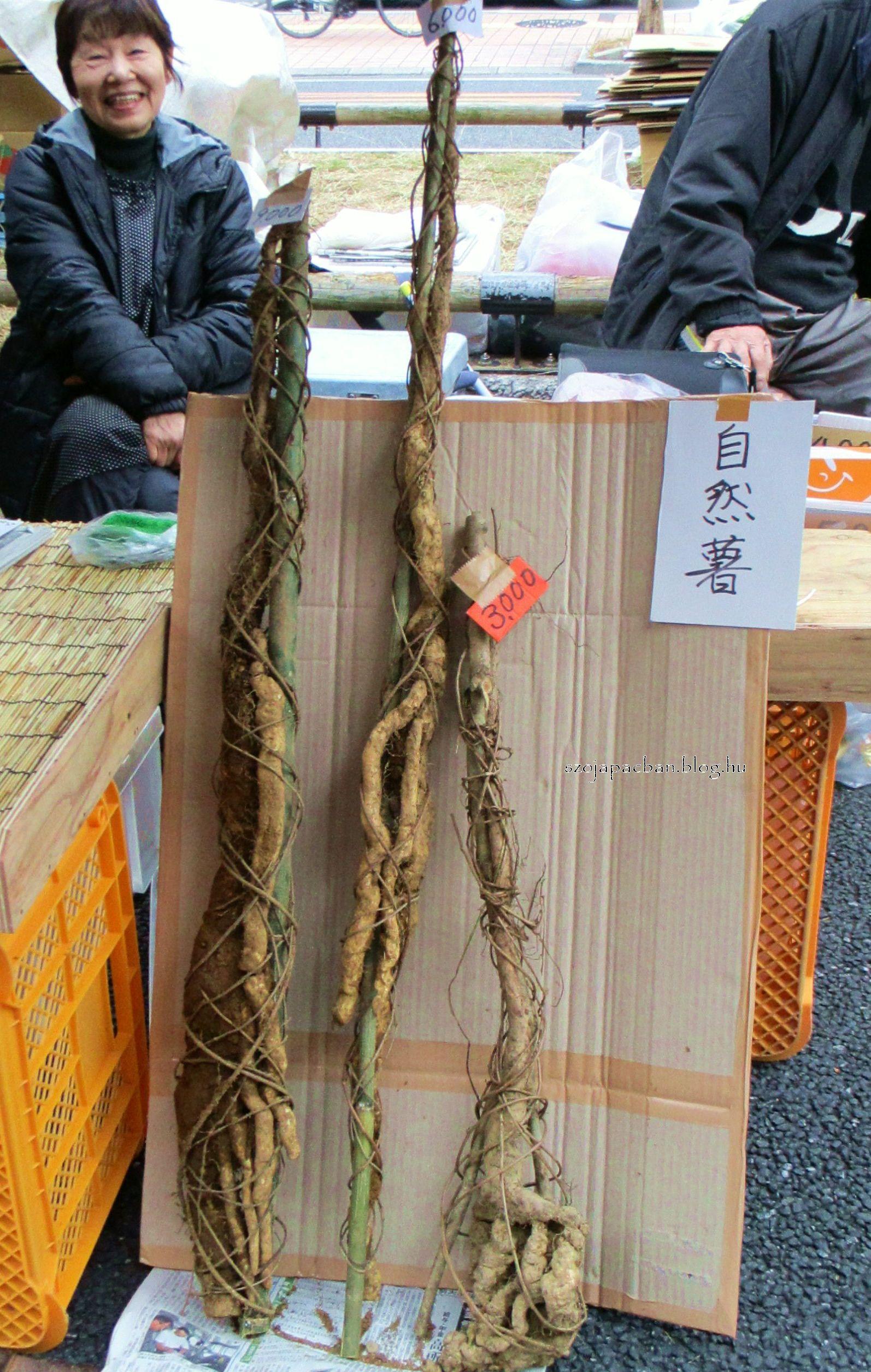 Dzsinendzsó, értékes vad, hegyi jamszgyökér 9000-300 jenig