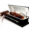 Rovarirtás - hangya, csótány
