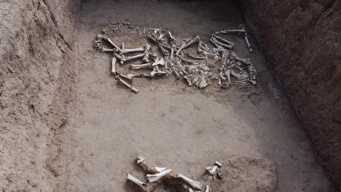 Egyik csoportos kirándulásunk során egy korábban feltárt lelőhelyet is megszemlélhettünk: a 10-15 méter mély gödrökben gyakran egész ló- és szarvasmarha csontvázak őrződtek meg