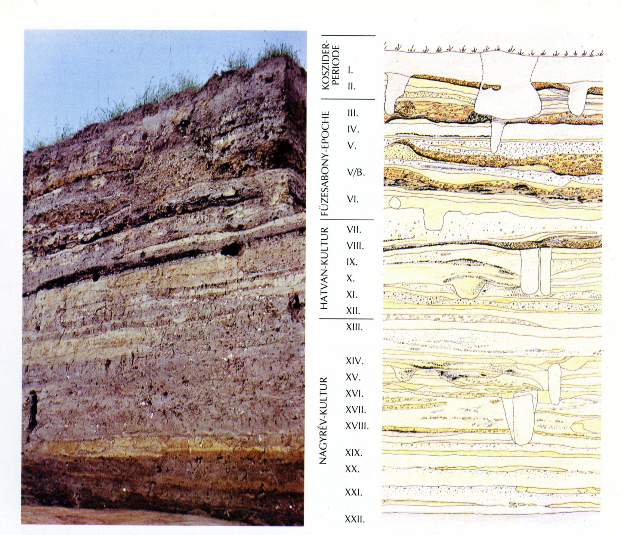 A telep metszete és rajza az 1975-ös ásatáson