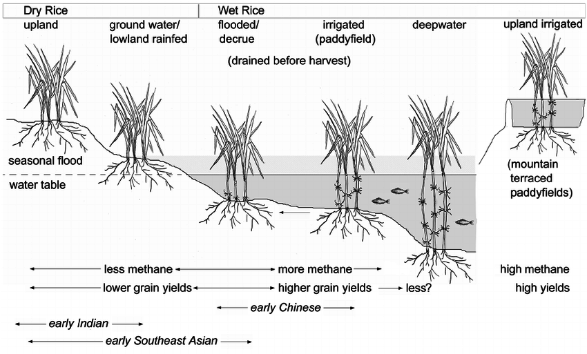 schematic-diagram-contrasting-the-major-variations-in-rice-cultivation-systems-including.png