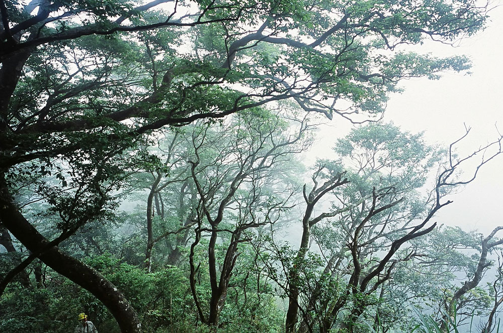 song-of-the-forest-2-kicsi.jpg