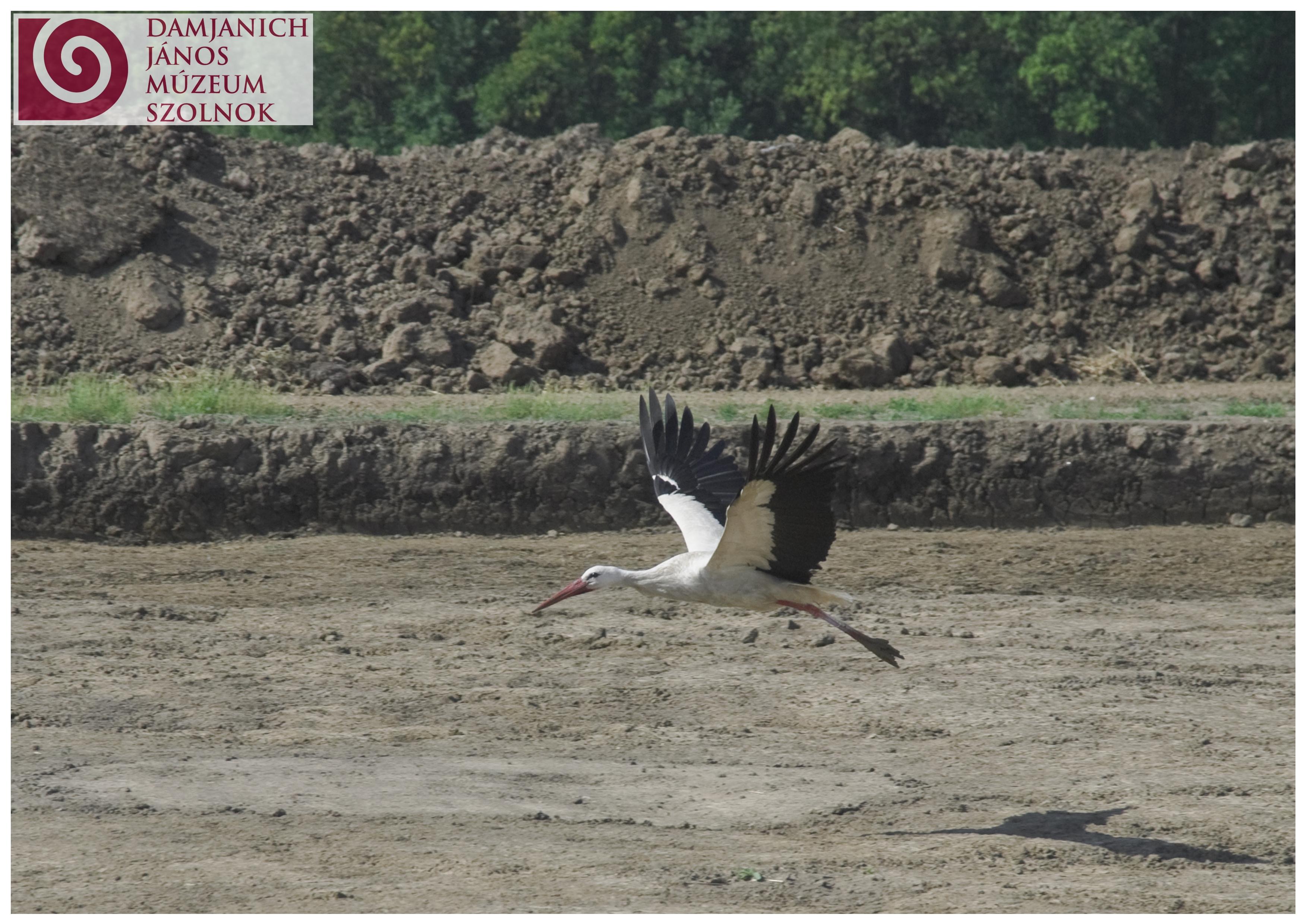 stork1.jpg