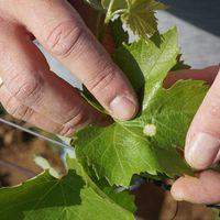 Tavaszi növényvédelmi hírek