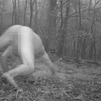 Meztelen férfiről rögzített képeket egy erdei kamera