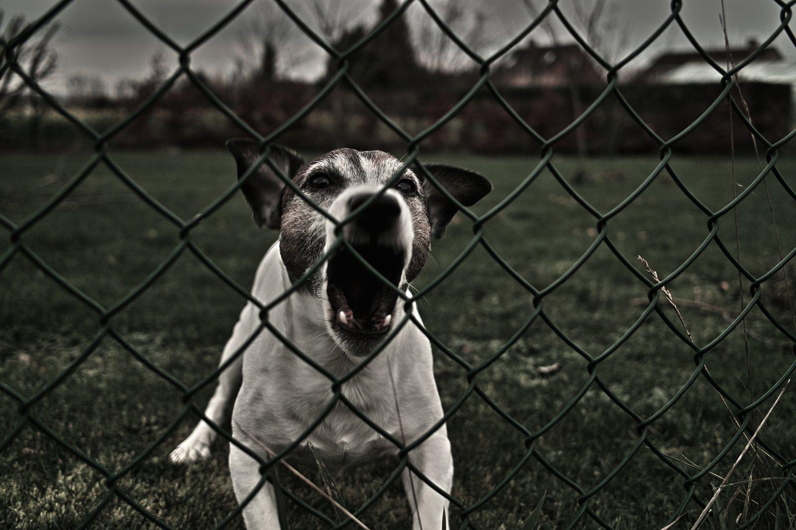 dog-eat-dog-2-2-1245209.jpg