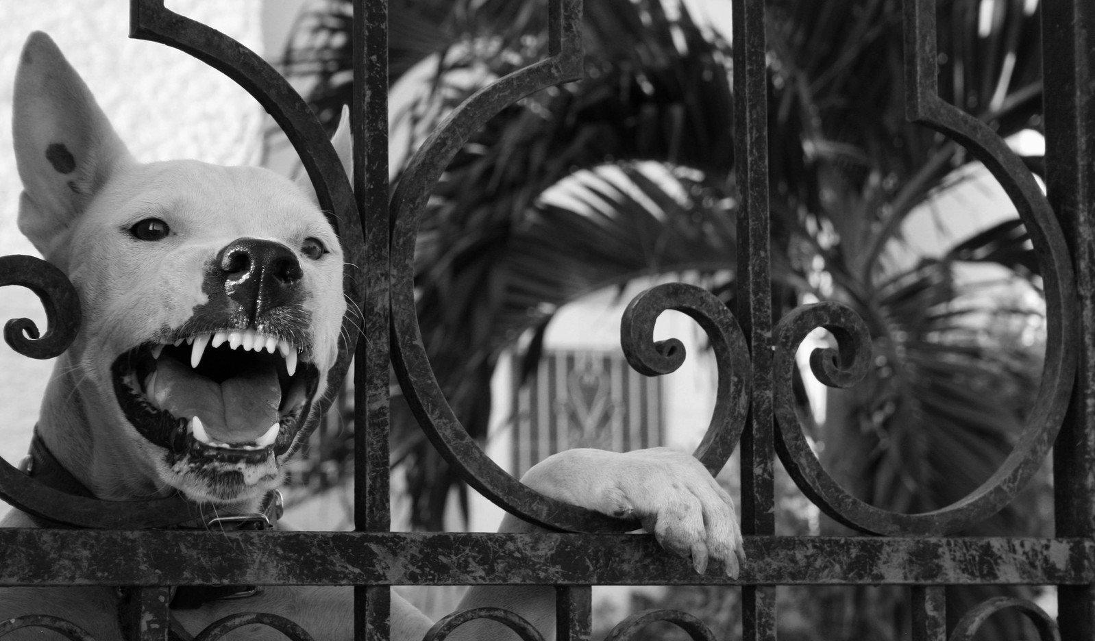 angry-dog-1307194.jpg