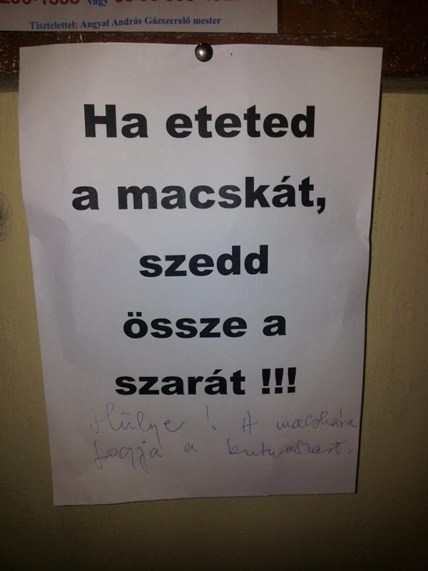 macskas_3.jpg
