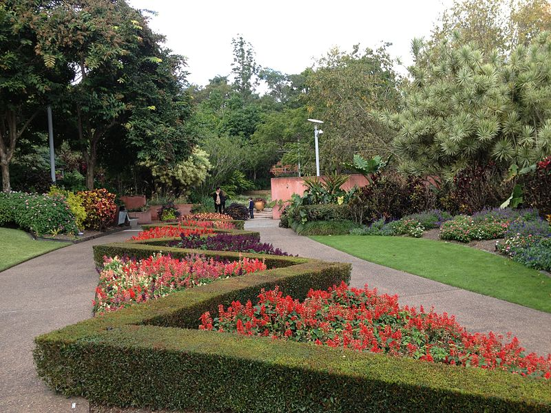800px-Autumn_flowers_in_Roma_Street_Parkland_052013_540.jpg