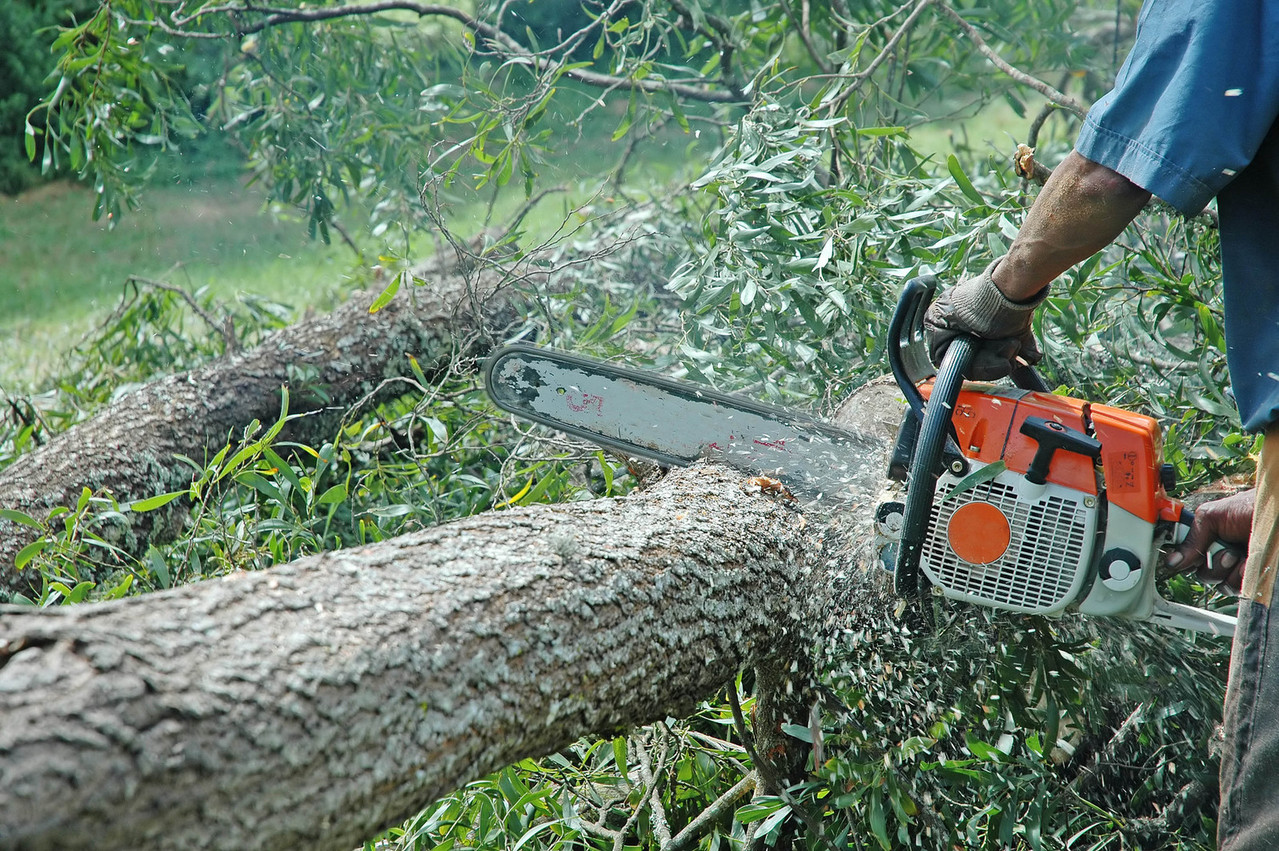 druzsba_chainsaws-in-action-2-1239325-1279x850.jpg