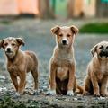 Mellekkel és kiskutyákkal tényleg mindent el lehet adni?