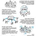 Bars Lívia | Bourdieu: Alapelvek a kulturális alkotások szociológiájához