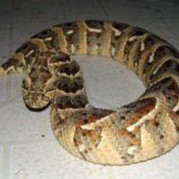 Kígyó marta meg a stáb tagját!