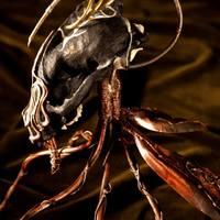 Koponyányi pókmanyók