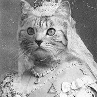 Előkelő macskaságok