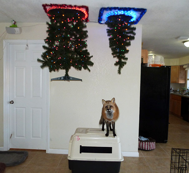 protecting-christmas-tree-from-dogs-cats-pets-17-585a73af7574f_605.jpg